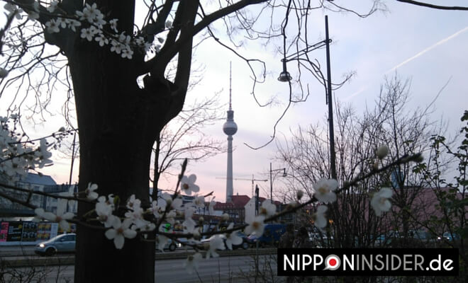 ©23.März 2016 by Nipponinsider | Den ersten blühenden Baum in Berlin gesichtet!!! Bild: Fernsehturm im Hintergrund, im Vordergrund die Blüten eines Baumes.