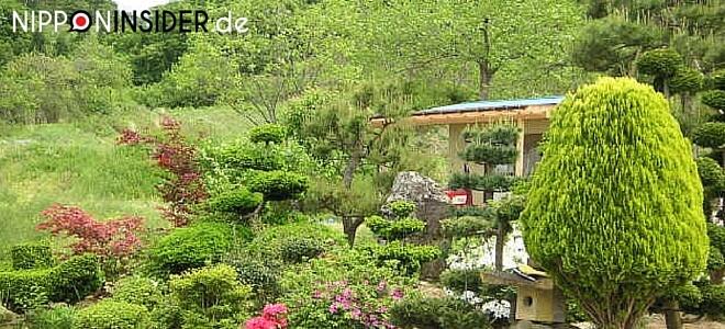 Bild zum japanischen Feiertag: Midori no Hi, Tag der Natur. Bild: japanischer Garten | nipponinsider japanblog