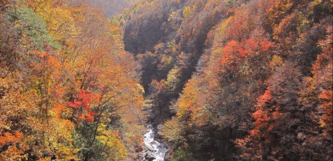 Herbst in Japan, die Blätter der Bäume färben sich in Gelb, Orange und Rot.