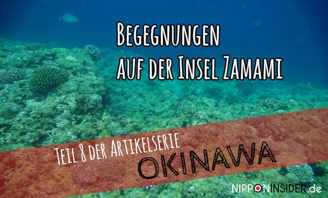 Teil 8 der Artikelserie OKINAWA - Begegnungen auf Zamami-jima. Bild von den Korallen vor der Insel   Nipponinsider