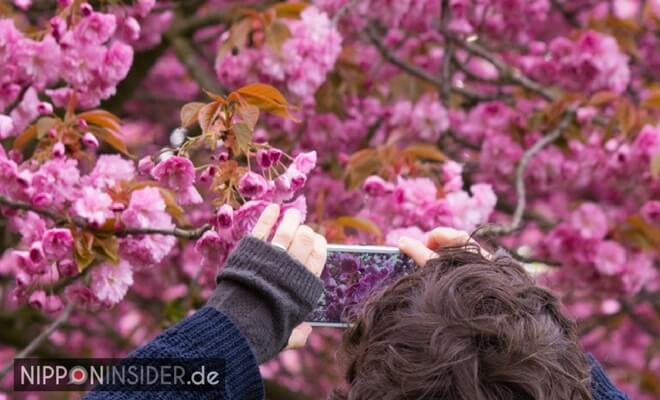 Fotografieren von Kirschblüten in Berlin | Nipponinsider