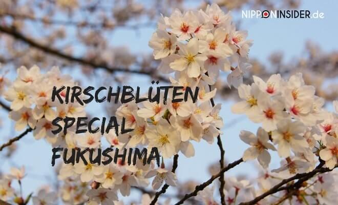 Kirschblüten in Japan Special. Sakura in Japan | Nipponinsider Japanblog