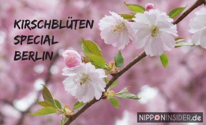 Kirschblüten Special. Bild einer Kirschblüte, Yaezakura. Sakura in Berlin auf Nipponinsider Japanblog