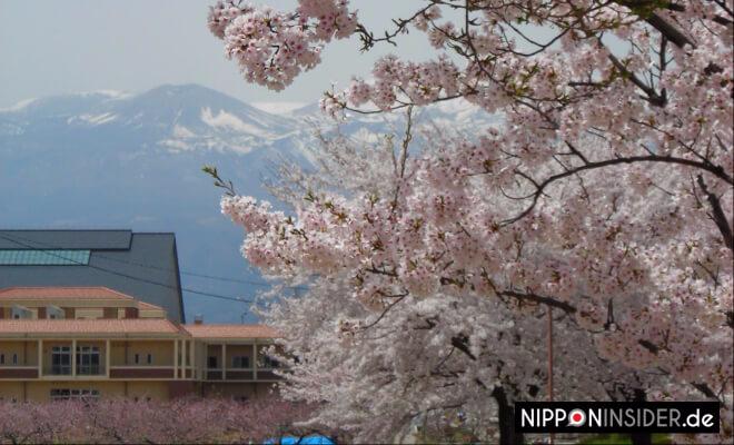 Azuma-Kofuji in Fukushima mit Kirschblüten im Vordergrund | Nipponinsider