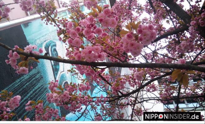 Kirschbaum vor Graffiti | Nipponinsider Japanblog