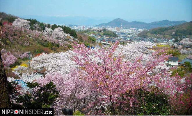 Blühende Bäume und ein weiter Blick auf die Stadt Fukushima und die umliegenden Berge | Nipponinsider Japanblog