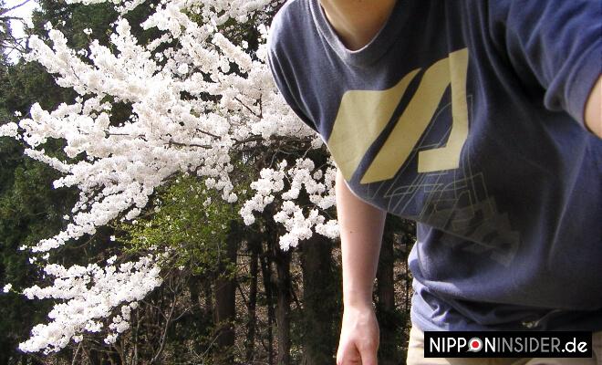 Schnappschuss beim Positionieren der Kamera vor blühenden Kirschbäumen. | Nipponinsider