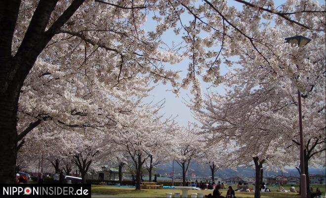 Picknick unter Kirschbäumen in Japan Fukushima Shinobu-yama | Nipponinsider