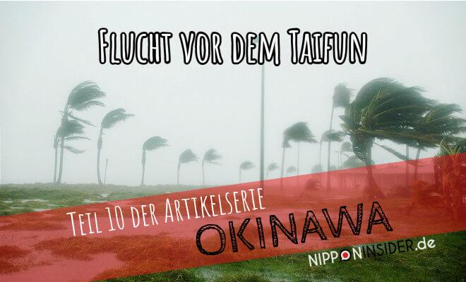 Flucht vor dem Taifun No 9 - Teil 10 der Artikelserie meiner Okinawareise mit dem Fahrrad. Bild von Palmen im Wind bei Regen | Nipponinsider Japanblog