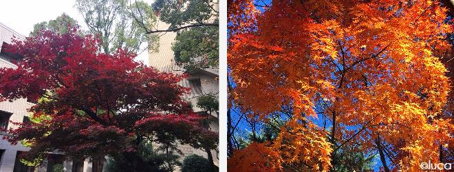 Herbst an der Uni von Kobe