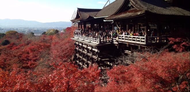 Momijigari- Japaner schauen sich die roten Laubbäume im Herbst an