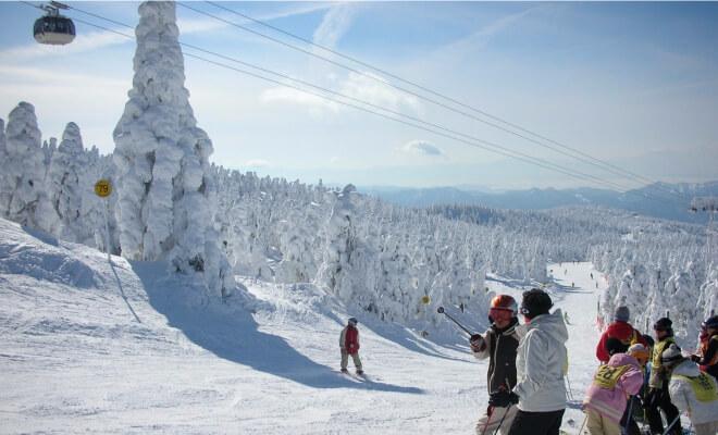 Skifahren im Zaogebiet / Yamagata