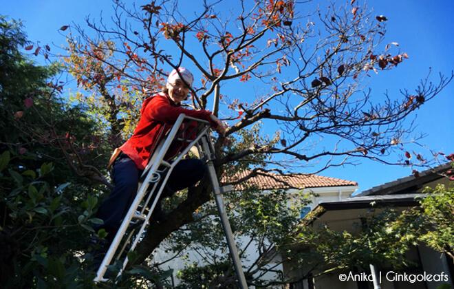 Anika steht auf der Leiter in ihrem Garten unter blauem Himmel vor einem Baum | Gastartikel von Anika zum Thema Japanliebe | Nipponinsider