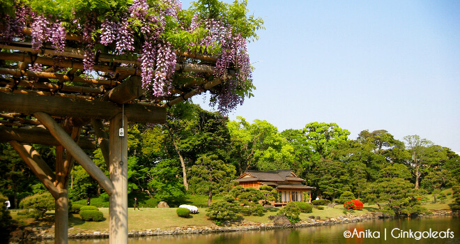 Hamarikyu Japan | Gastartikel zum Thema Japanliebe von Anika | Nipponinsider