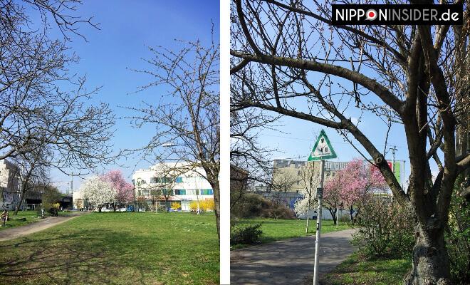 Frankfurter Allee Ecke Gürtelstraße. Park mit Blühenden Bäumen ohne Kirschbäume | Nipponinsider
