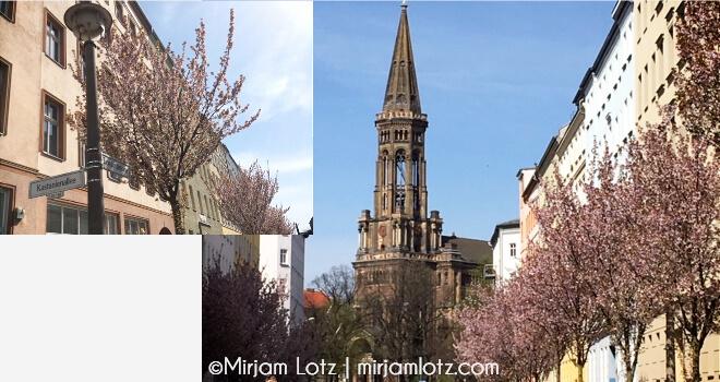 Sakura Kirschblüten Guide Berlin | Zionskirche und Zionskirchstraße mit kleinen Kirschbäumen | nipponinsider