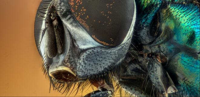 Großaufnahme eines Insekts. Mushi no Hi. Tag des Insekts