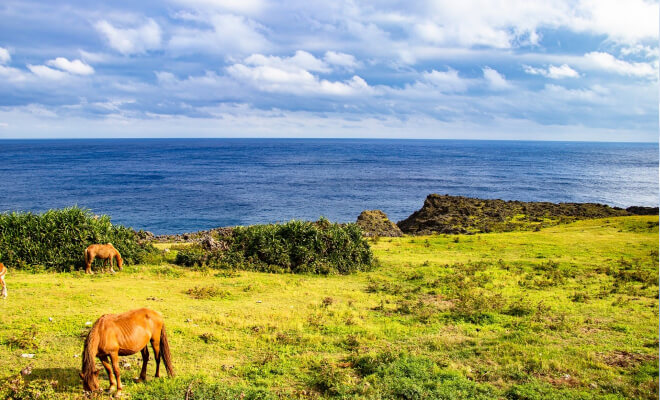 Pferde grasen am Meer auf Okinawa Iejima