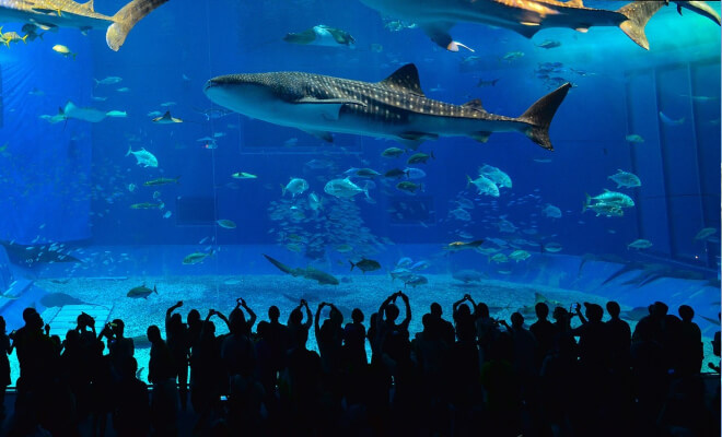 Menschenmassen vor dem Hauptbecken im Menschen stehen am Okinawa Churaumi Aquarium in Motobu Okinawa