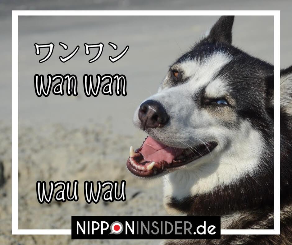 Der Hund macht auf japanisch wanwan und nicht wauwau | japanische Tierlaute auf Nipponinsider