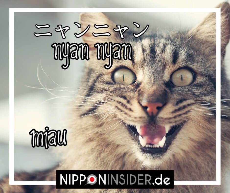 Die Katze macht auf japanische Nyannyan und nicht miau. Japanische Tierlaute auf Nipponinsider