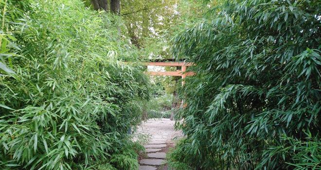 japanisches rotes Tori im Banbuswald von Bad Langensalza